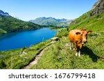 Swiss Milk Secret Keeper  Cow...