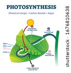 photosynthesis leaf vector... | Shutterstock .eps vector #1676810638