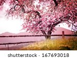 Stock photo blossom tree over nature background spring flowers spring background 167693018