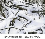 winter woods | Shutterstock . vector #167697902