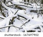 winter woods | Shutterstock . vector #167697902