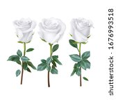 Realistic Rose Design Isolated...