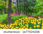 Various Colored Tulips At The...