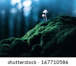 Постер, плакат: Poisonous mushrooms in the