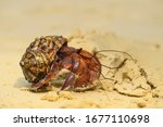 Close Up To Hermit Crab On...