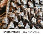 Close Up Of A Pine Come