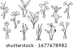 set of hand drawn micro greens  ...   Shutterstock .eps vector #1677678982