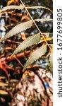 Photo of Leaves of a Tree ( Edited on Lightroom )