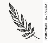 branch plant leaf botanical...   Shutterstock .eps vector #1677737365