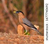 beautiful bird  brahminy... | Shutterstock . vector #1677740692