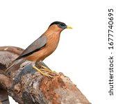 beautiful bird  brahminy... | Shutterstock . vector #1677740695