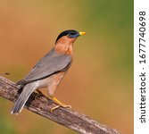 beautiful bird  brahminy... | Shutterstock . vector #1677740698