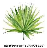 Watercolour palm leaf. Tropical plant element. Hand drawn botanical illustration on white background. - stock photo