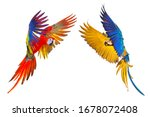 Colorful Flying Parrots...