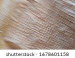 Dried Banana Leaf Texture Very...