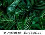 Monstera Green Leaves Or...