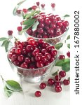 Freshly Picked Wild Cherries