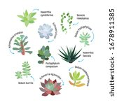 Graphic Set With Succulents...