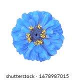 surreal blue zinnia flower... | Shutterstock . vector #1678987015