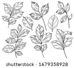 hand drawn different leaves set ... | Shutterstock .eps vector #1679358928