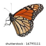 Alive Monarch Butterfly...
