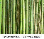 Bamboo Forest. Natural Tropica...