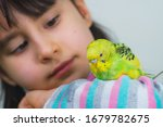 Small photo of Cool budgie. A cute yellow budgerigar is sitting on the shoulder of a girl with long hair. Tamed Pet