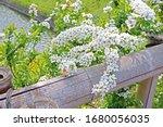 the natural roadside blossom... | Shutterstock . vector #1680056035