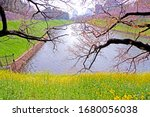 the natural roadside blossom... | Shutterstock . vector #1680056038