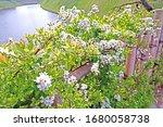 the natural roadside white... | Shutterstock . vector #1680058738