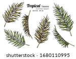 set of palm leaf drawing... | Shutterstock .eps vector #1680110995