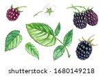 watercolor drawing blackberry ... | Shutterstock . vector #1680149218