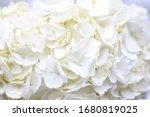 White Hydrangea Floral...