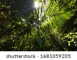 Amazon Rain Forest From Within
