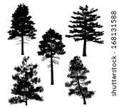 pine silhouette | Shutterstock . vector #168131588