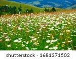 Nature  Summer Landscape In...