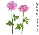 two pink roses with leaves and... | Shutterstock .eps vector #1681422382
