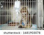 stray cat in cage in veterinary ... | Shutterstock . vector #1681903078