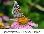Butterfly Sit On A Beautiful...
