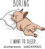 Cute French Bulldog Sleeping On ...