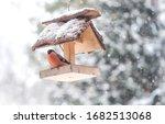 Closeup Of Bullfinch Bird In...