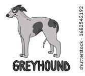 cute cartoon greyhound dog...   Shutterstock .eps vector #1682542192