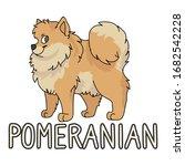 cute cartoon pomeranian dog...   Shutterstock .eps vector #1682542228