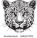 Black and white vector sketch of a leopard's face - stock vector