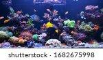 Sea Water Aquarium Captures Of...