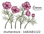 pink cosmos flower and leaf... | Shutterstock .eps vector #1682681122