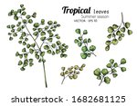 set of fern leaf drawing... | Shutterstock .eps vector #1682681125
