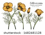 orange california poppy flower... | Shutterstock .eps vector #1682681128