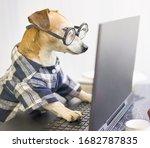 Freelancer At Work Remotely...
