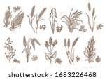 cereal grain and plant isolated ... | Shutterstock .eps vector #1683226468
